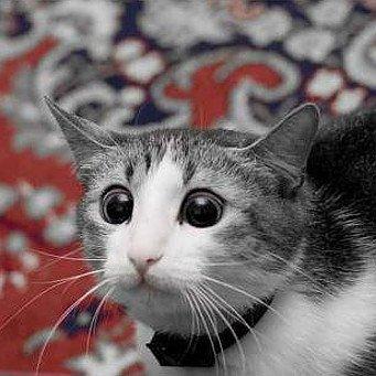 Как снять стресс у кота