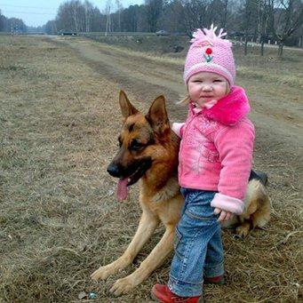 овчарки и дети фото