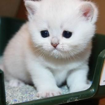 Кота от лактусан