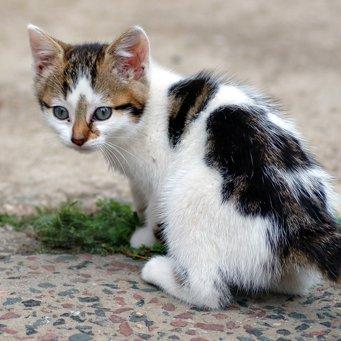 Почему у котенка текут слюни?