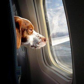 Risultati immagini per animali aereo