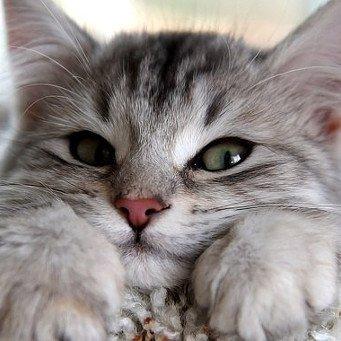 как часто травят глистов у котов