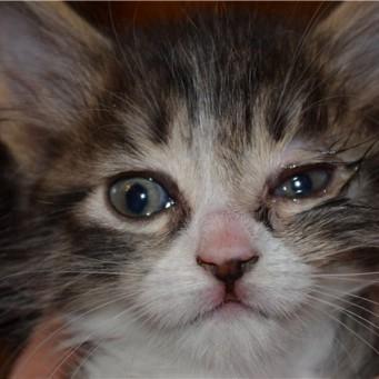 Черные выделения у кота из глаза