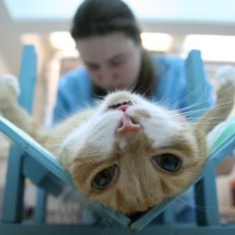 После кастрации кот не кушает