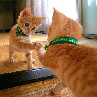 Как научить кота команде сидеть