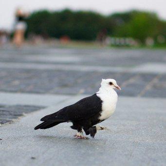картинки белые голуби