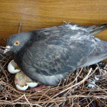 Гнездо птиц своими руками