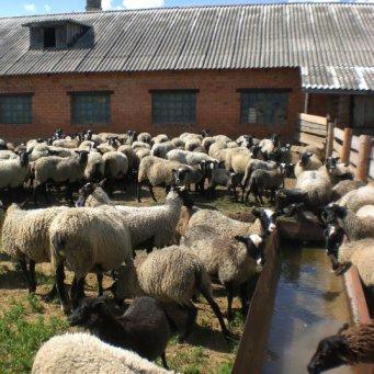 Помещение для козы своими руками 18
