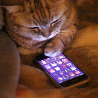Что коты делают дома по ночам
