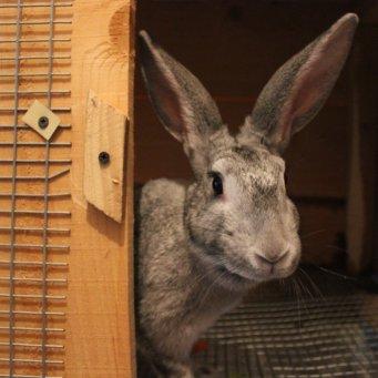 Крольчатники своими руками чертежи размеры