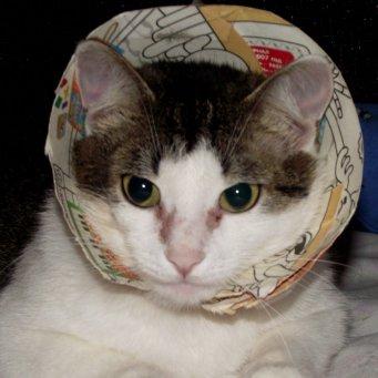 пищевая аллергия у кошек фото