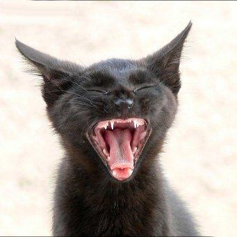 как часто давать кошке лекарство от глистов