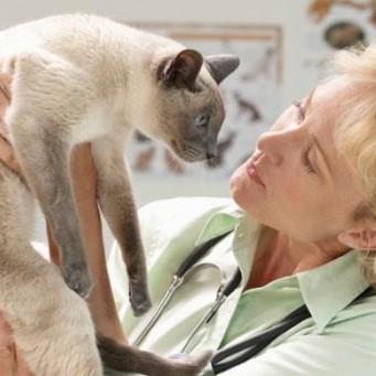 Доза амоксиклава для кота