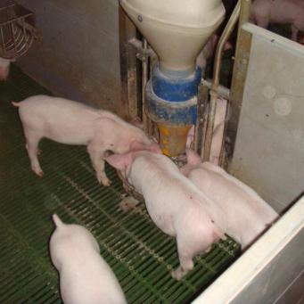 Поилку для свиней своими руками