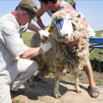 смотреть кино, инновационные технологии в овцеводстве 2017 гороскоп Весы