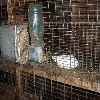 Поилки для кроликов своими руками в клетках 291