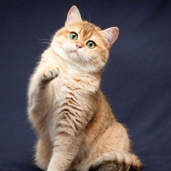 Дозировка гептрал для котов