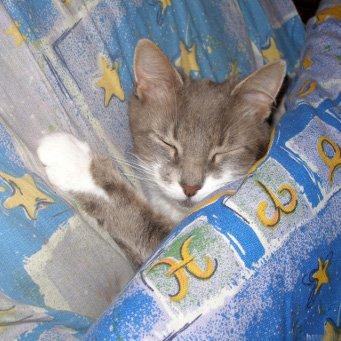 Как определить что кошка заболела, симптомы