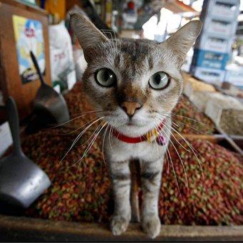 цистит ц кошек