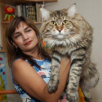 фото кошка большая