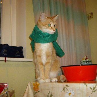 Болеет горло у котов