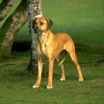 Почему у собаки выпадает шерсть?