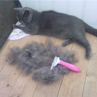 Фурминатор для шерсти кошек купить