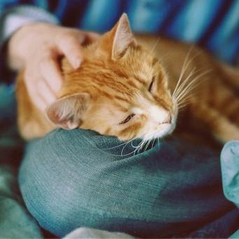 Что если у кота идет пена изо рта