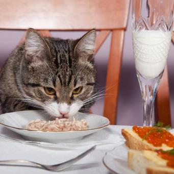 Флуконазол коту от лишая