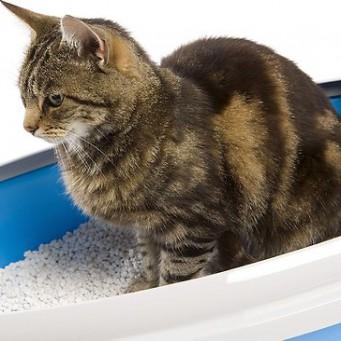 Средство меткий кот купит