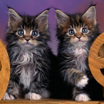 Каким кормом кормить кастрированных котов