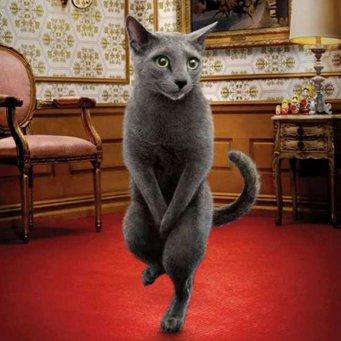 Причина возникновения у котов мочекаменной болезни