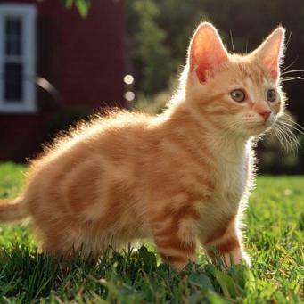 фото котят смотреть