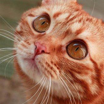 У кошки слезятся глаза что делать в домашних условиях 460