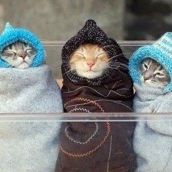 Сколько живут кошки и коты? Отвечает ветеринар