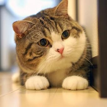 Кот мару что за порода