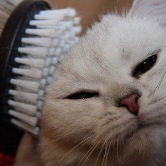 Чем кормить кота чтобы не лезла шерсть у