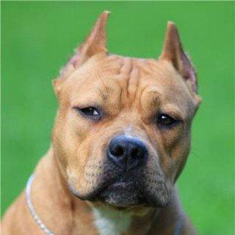 собачья аллергия чем лечить