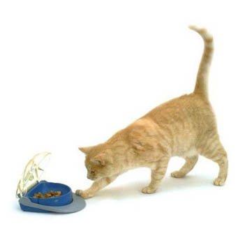 правильное питание кошки натуральными продуктами