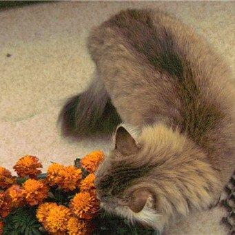 Как отучить кошку копать землю в цветах