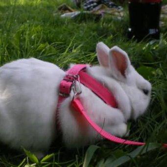 Как сделать кролика своими руками фото 124