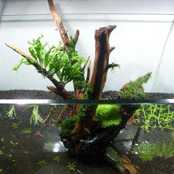 Изготовить корягу в аквариум своими руками фото 220