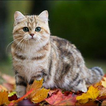 Как можно назвать кота