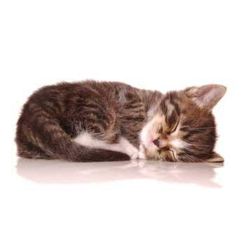 Кот после укола ношпы