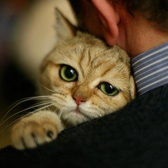Кот уже сутки не мочится
