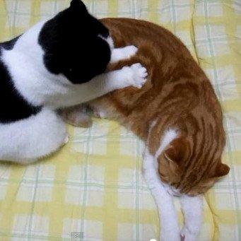 Глисты у кошек и котят. Как избавиться от глистов Кошка 35