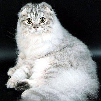пушистые кошки фото породы