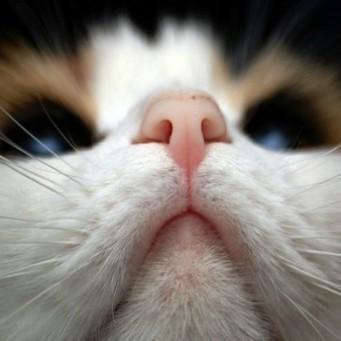 У кота горячий влажный нос