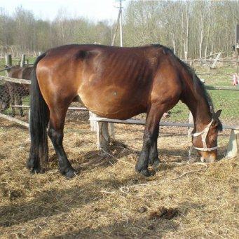 этого термобелье беременность лошади по месяцам заключение: помните, что