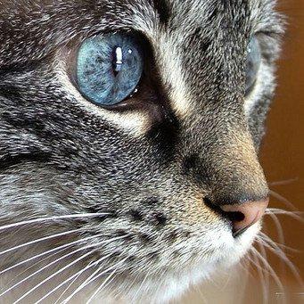 Можно ли промывать глаза коту ромашкой